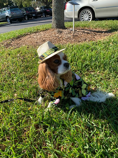 Pet Parade Cape Coral