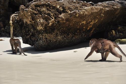 Monkey Beach mama!