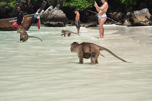 Monkey Beach, Phi Phi