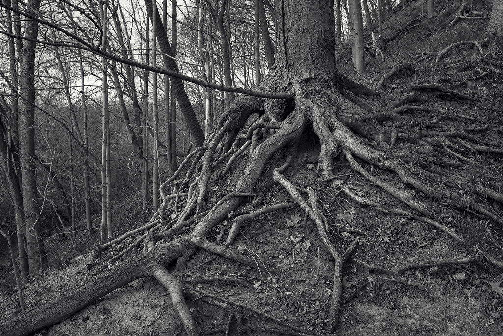 Fairly Rooted by JeffStewartPhotos