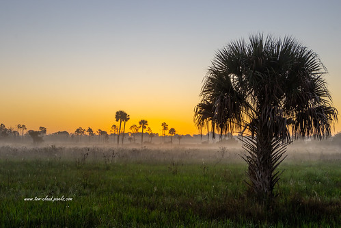 sun sunrise sky cloudless weather trees palm palmtree foreground colorful grass grasses marsh oldflorida fog foggy lowlying horizon glow glowing nature mothernature outdoors pineglades naturalarea pinegladesnaturalarea jupiter palmbeachcounty florida usa
