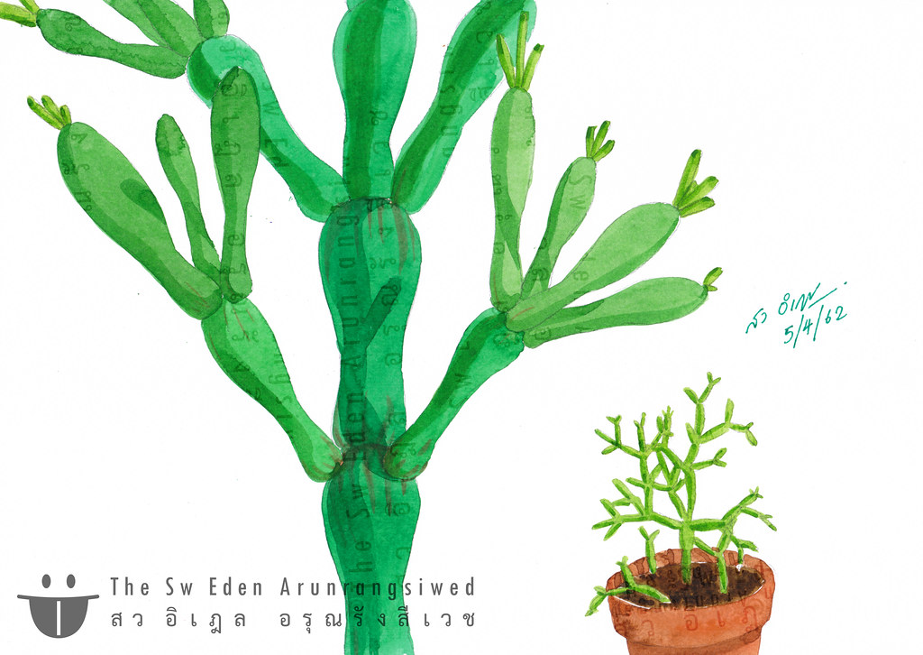 cactus cacti กระบองเพชร grew grow keep small tiny cute