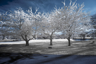 _DSC3685 Trees In Bloom