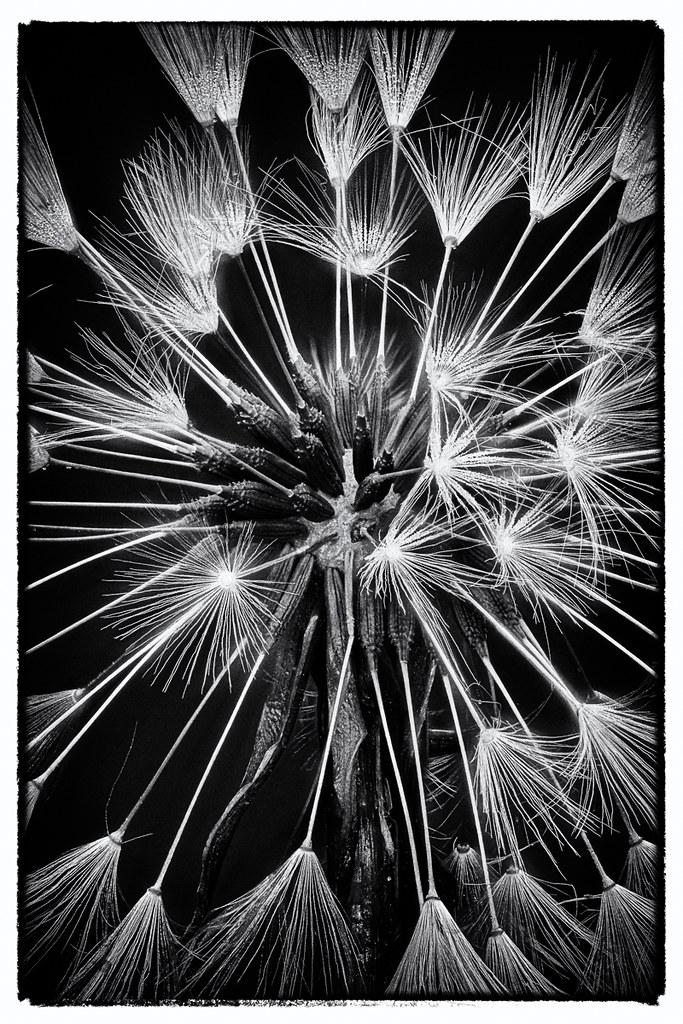 Mono fireworks
