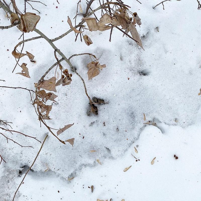 Фактуры снега