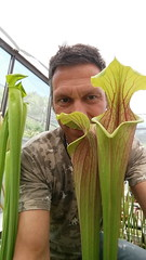 Me and huge pitcher of Sarracenia flava