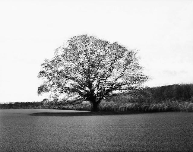 Multieksponering: Sparekassetræ