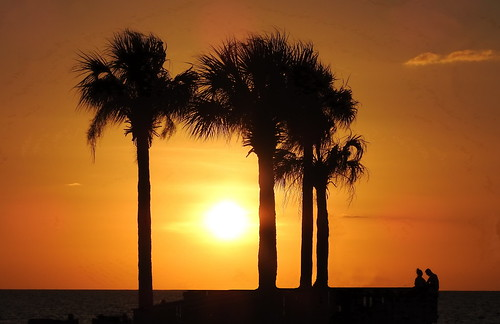 sunset palmtrees silhouette nature beach couple 2018