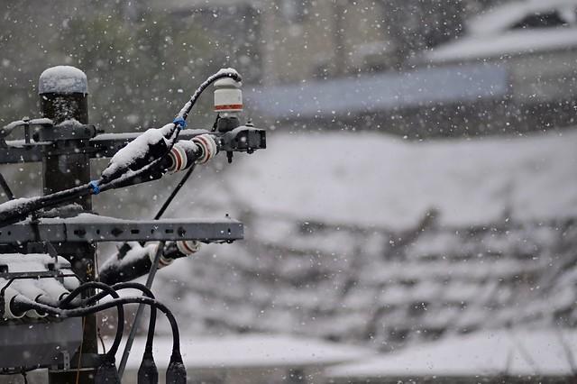 Snow of the out of season,Kawasaki city 2020/03 No.1.