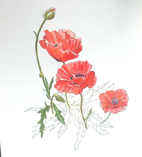 Poppies for VE Day