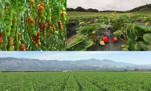High-value crops from the Fox Canyon