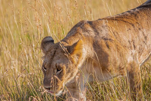 Masai Mara's wildlife