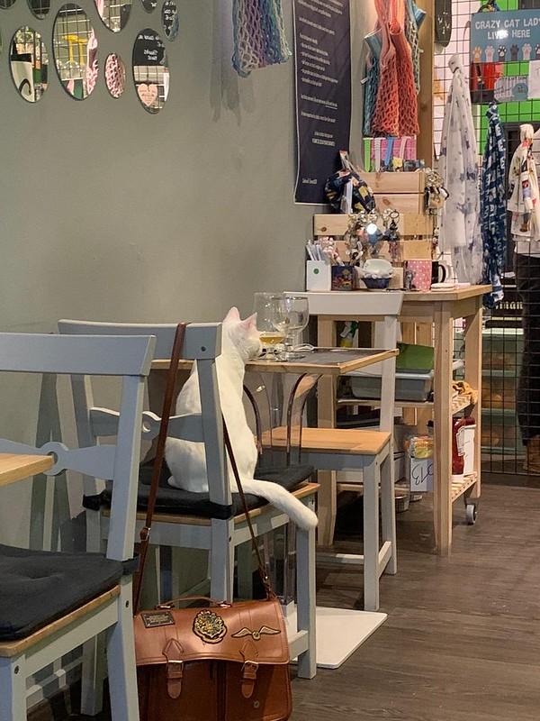 Cat Café en Bruselas