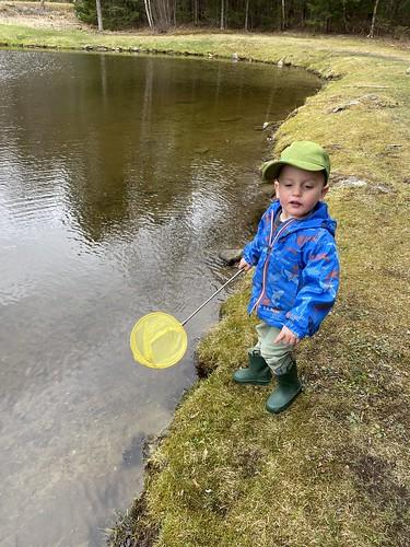 searching for frog eggs at Bretzfelder Park