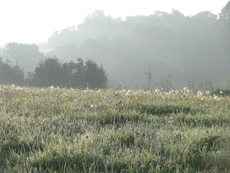 Dewy meadow, Riverdale
