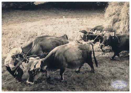 Carro de hierba en Besullo