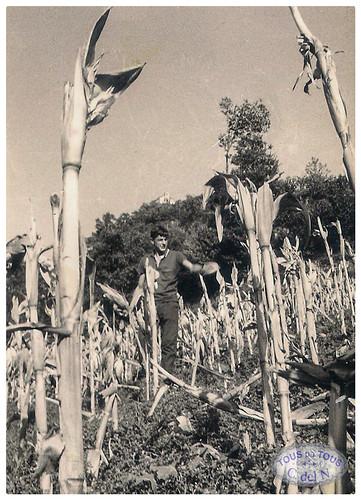 Escamando maíz en Besullo