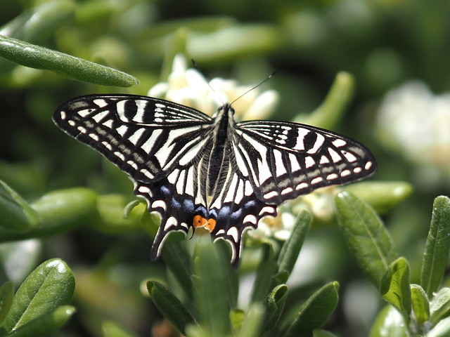 OMD EM5 MarkIII 5.9.2020 butterfly 2