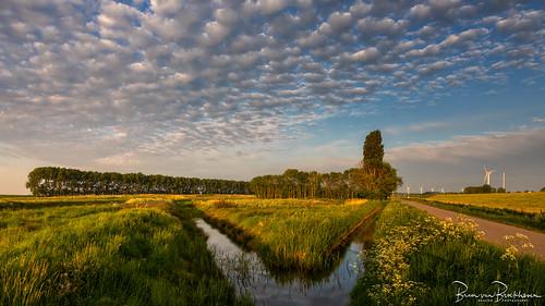 Altocumulus clouds and evening light