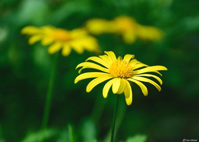 Cheerful Yellow Explored