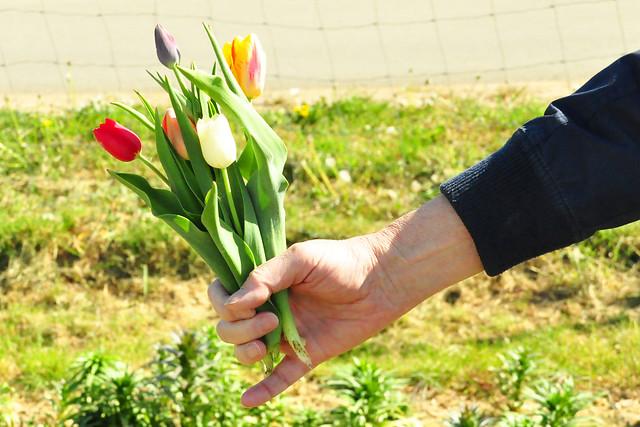 Mai 2020 ... Spargel, Erdbeeren, Salat, Erdbeertörtchen ... Brigitte Stolle