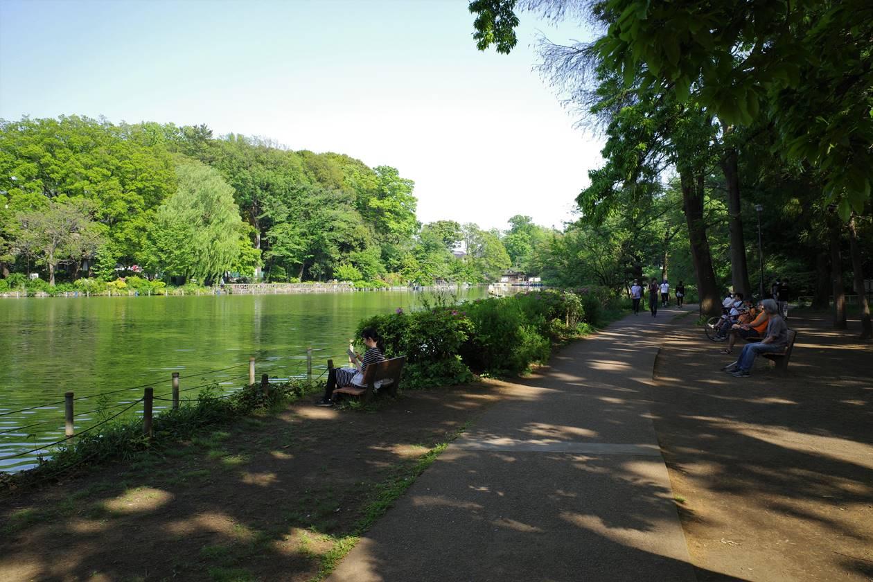 善福寺公園の善福寺池