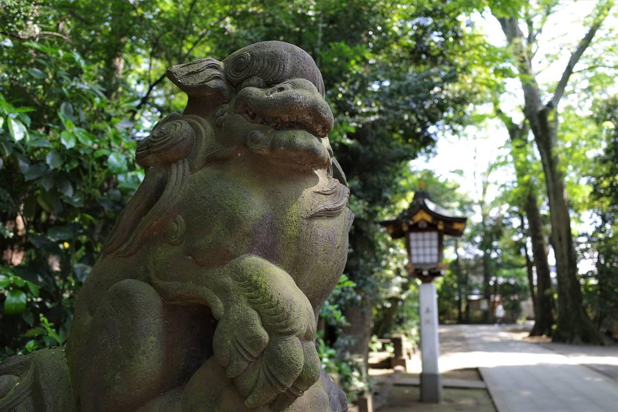 荻窪八幡神社・狛犬