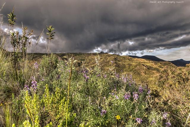 Flora del cañón de Palca