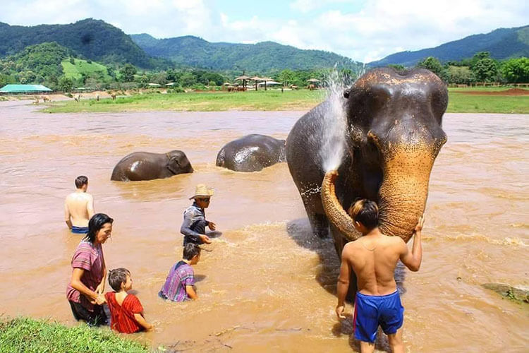 Elephant Natural Park in Chiang Mai Thailand