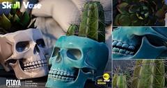 Pitaya - Skull vase → Happy Weekend