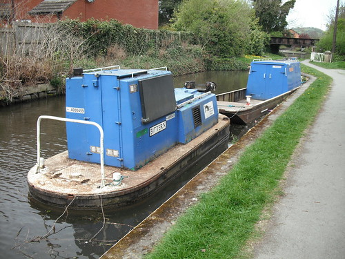 Bittern and barge