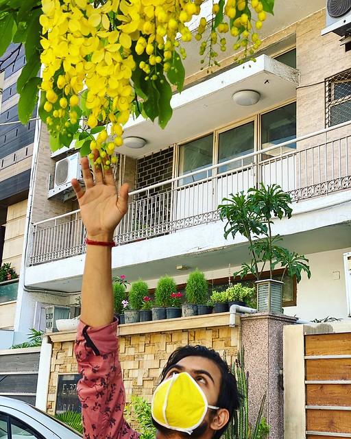 City Season - Amaltas & Gulmohar, Around Town
