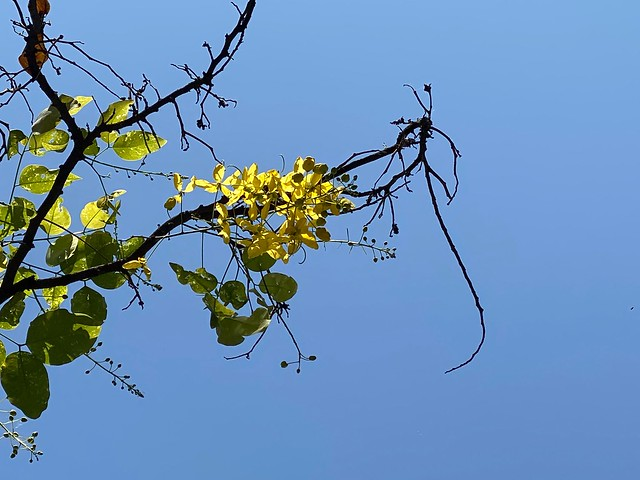 City Season - Amaltas & Gulmohar, Around Town