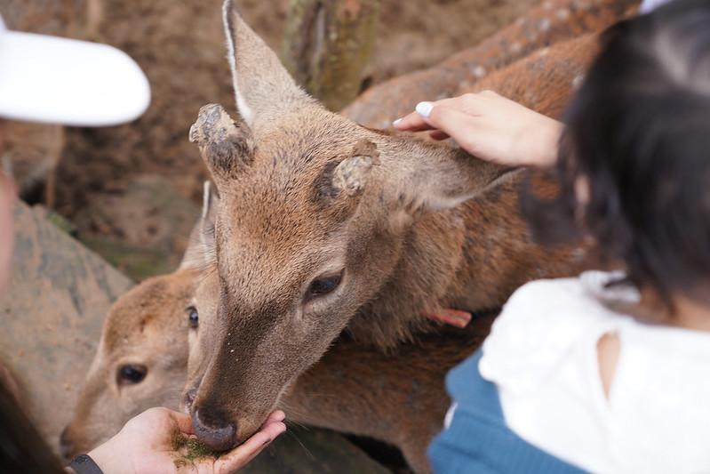 鹿羽松牧場