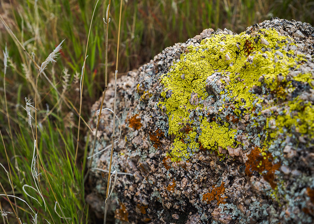 Never expected to find lichen growing in the semi-desert