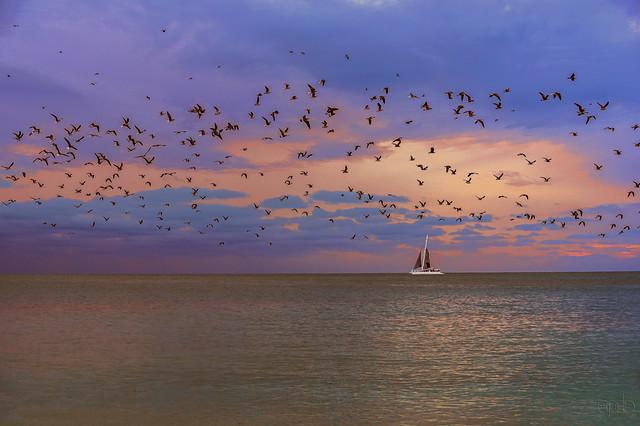 Sail Boat and Gulls