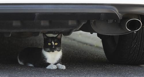 cat_under_car-20200509-100