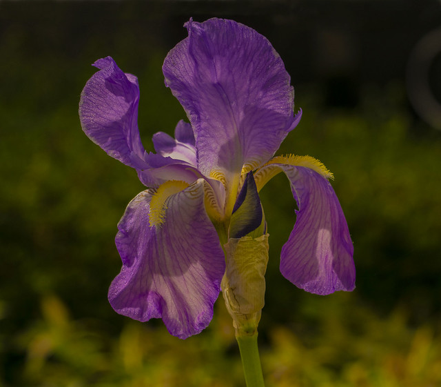 Flowers. (EXPLORED)