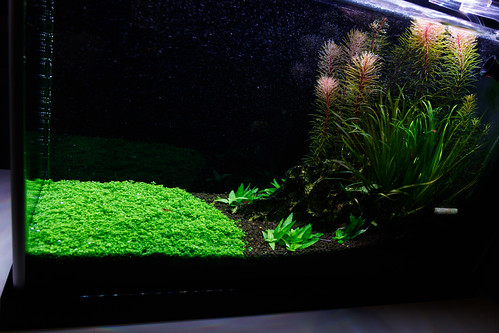 high tech planted Fluval Spec V Aquarium with ADA Amazonia II soil