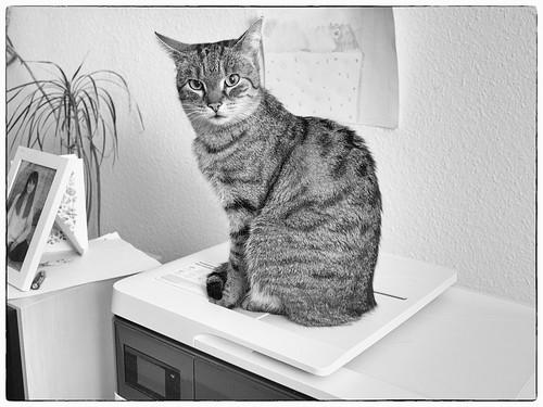 7e4_5092346_sfx_020-cat-on-printer