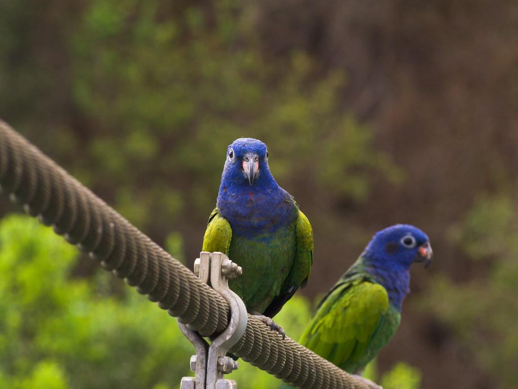 Aves exóticas del aviario del Parque Tricao.