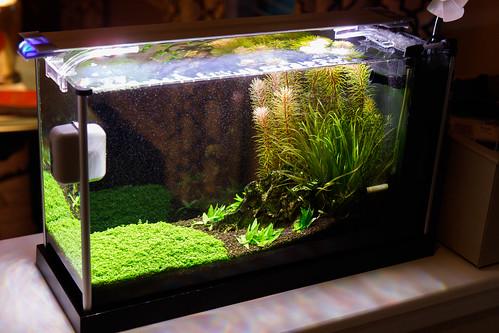 high tech planted Spec V Aquarium