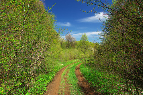 mountain road forest trees sky blue green nature landscape bulgaria