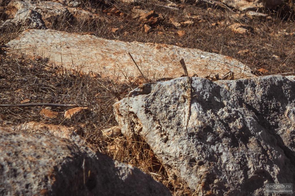 животные Кипра