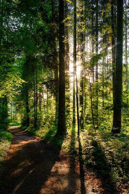 Forest Track V