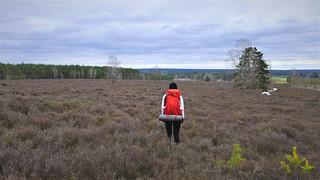 Naturpark Nordheide
