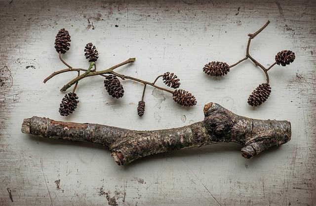 Twig Ideas