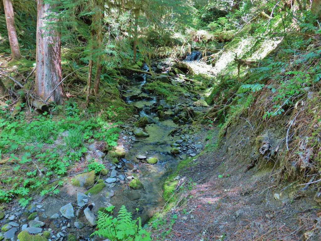 Creek along the North Fork Trail