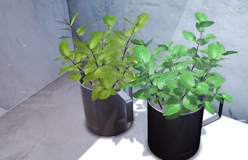[Dope+Mercy]Mint leaf pot