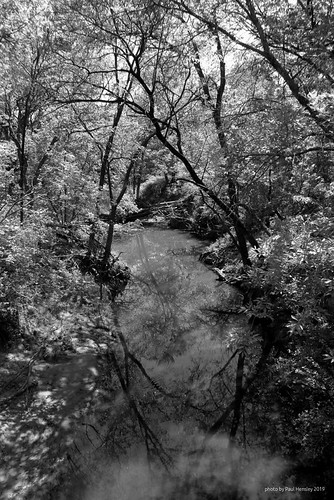 monochrome creek landscape woods reflections